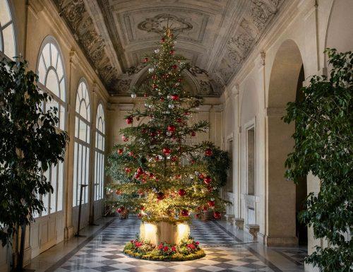 """Al Quirinale e Castelporziano alberi di Natale dalle zone colpite dalla tempesta """"Vaia"""""""