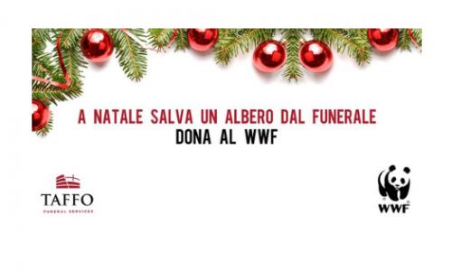 """Disboscamento, #SEPPELLACCHIO: """"A Natale salva un albero dal funerale"""""""