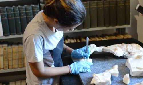 """""""Il Ritorno di Dioniso"""": progetto di riscoperta, restauro e valorizzazione di un cratere di marmo"""