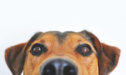 Ad Asti l'obbligo di lavare l'urina dei cani in strada, c'è l'ordinanza