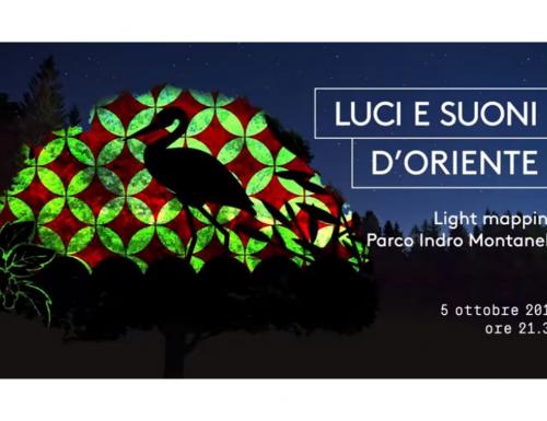 """Stasera a Milano """"Luci e suoni d'Oriente"""" il light mapping sugli alberi del Parco Indro Montanelli"""