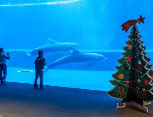 Natale all'Acquario di Genova e Galata Museo del Mare